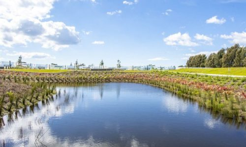 Manawa Wetland Pond