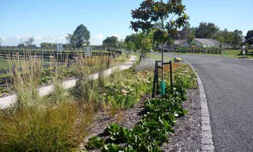 Matamata subdivision roadside planting