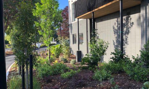 Retirement village driveway planting
