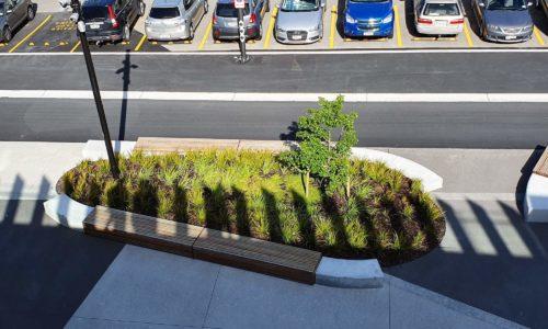 UoWaikato tauranga campus carpark street planting