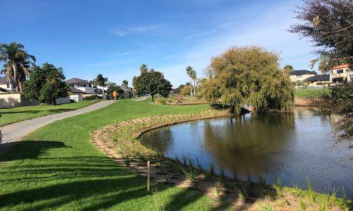 Wairakei Stream Wetland planting